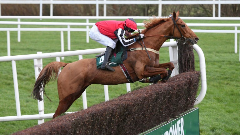Simply Ned: racked up a famous hat-trick in the Grade 1 Paddy Power Chase at Leopardstown's Christmas meeting