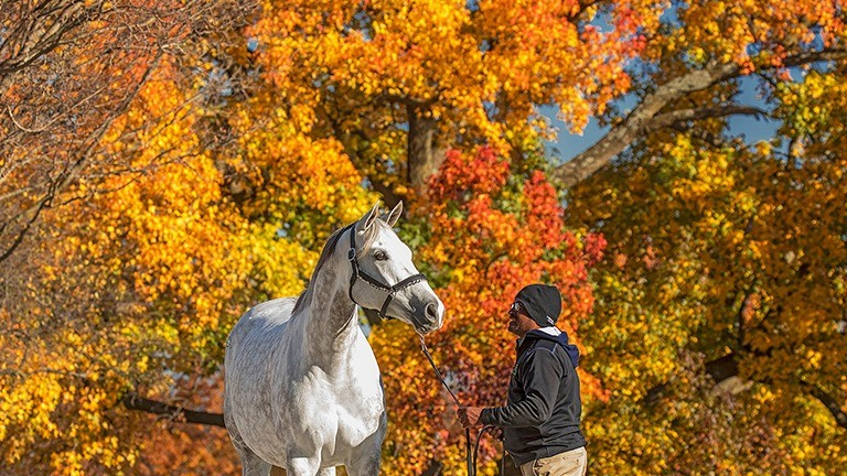 The Keeneland November Sale will take place amid the autumnal splendour of Kentucky