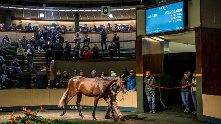 The Galileo filly out of Green Room, sold for a sale-topping seven-figure sum