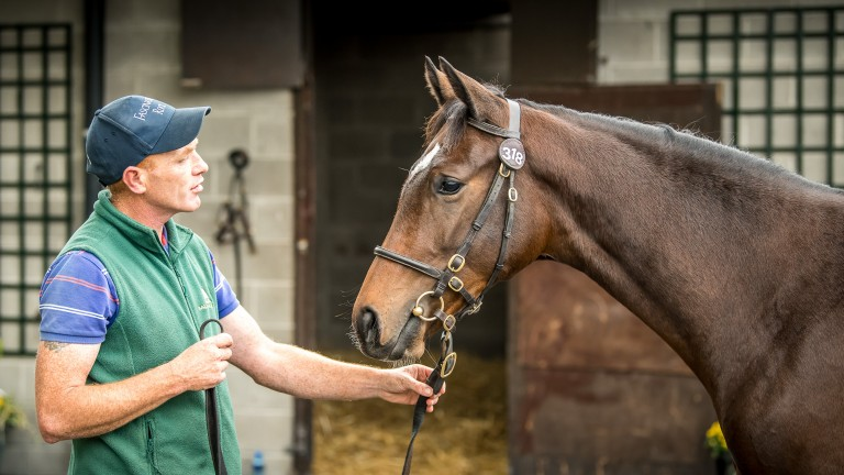 Wednesday's sale-topping filly in the stables at Goffs