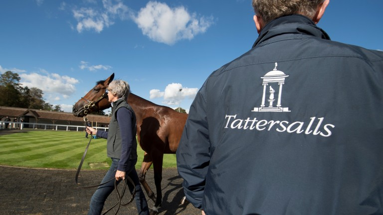 It's not all about sale-toppers and seven-figure yearlings at Book 1