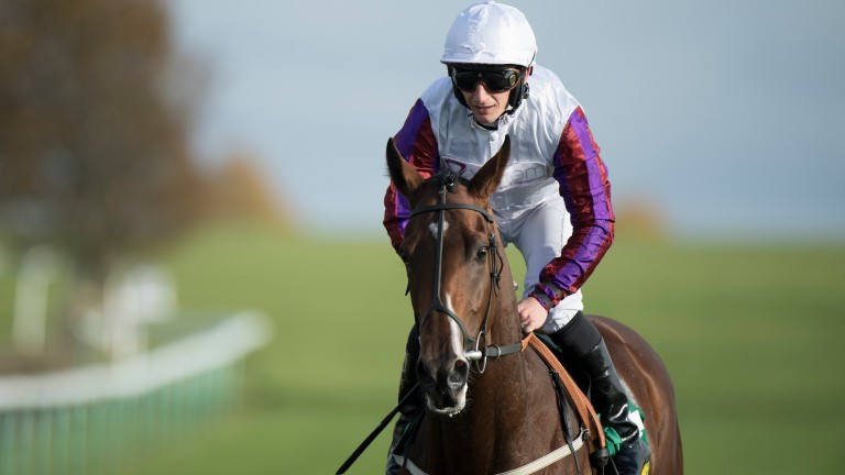 Laurens: bidding for a fifth Group 1 in the Sun Chariot Stakes