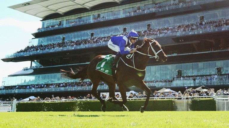 Winx: Goes for her 28th consecutive victory on Saturday