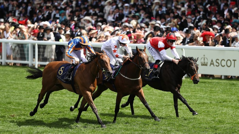 Signora Cabello (centre): the classy two-year-old has ensured a fruitful summer for John Quinn