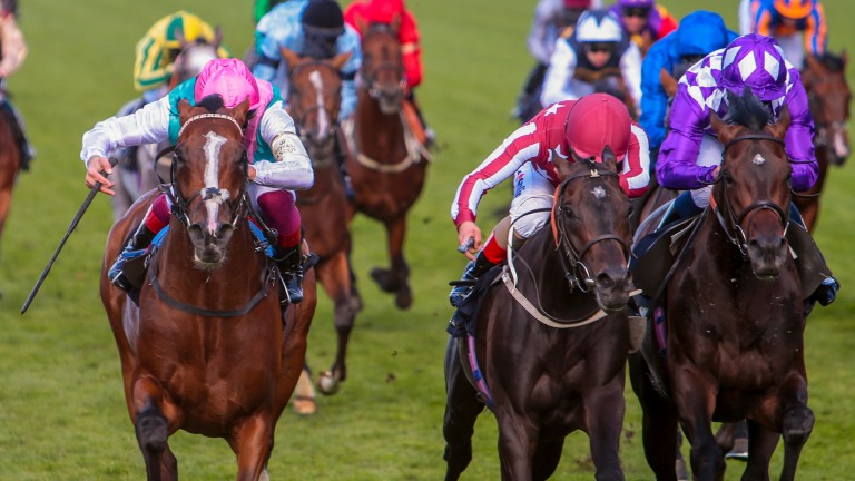 First Eleven (left): unlucky at Royal Ascot and bids to make amends