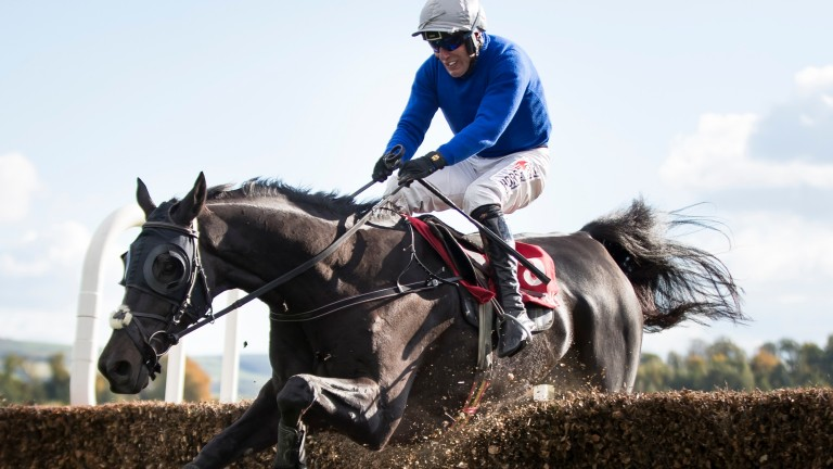 Power to the fore: Robbie Power and Woodland Opera clearing a fence on the way to victory in the Grade 2 PWC Champion Chase at Gowran