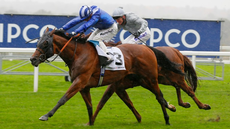 Tough going: Laraaib returns to form in the Group 3 Cumberland Lodge Stakes at Ascot