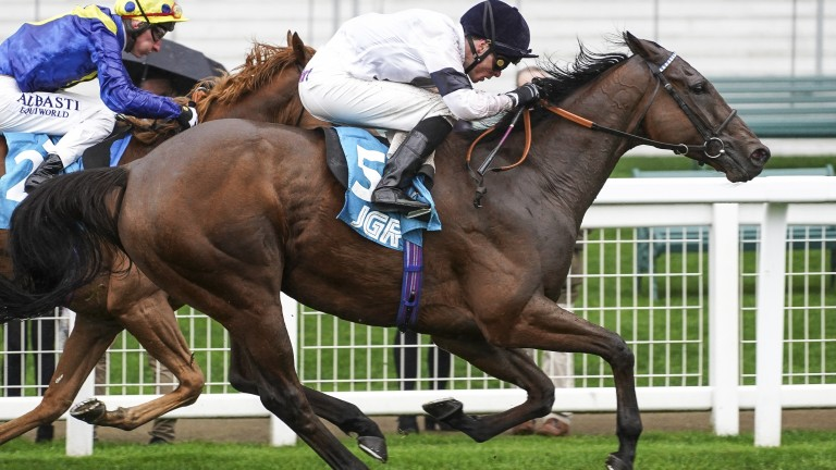 Head to head: Projection gets back to winning ways in the Group 3 John Guest Racing Bengough Stakes at Ascot