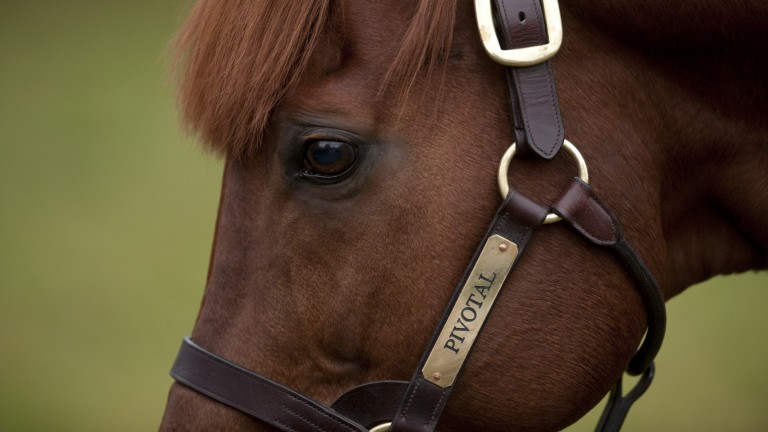 Pivotal at Cheveley Park Stud