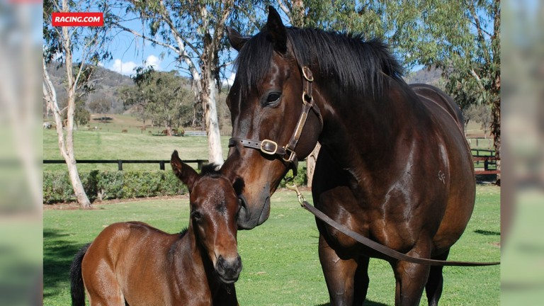 Black Caviar pictured with her fifth foal, a filly by I Am Invincible