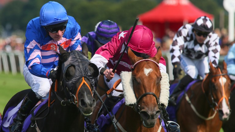 Pearl Noir (left) will make his 100th start at Catterick