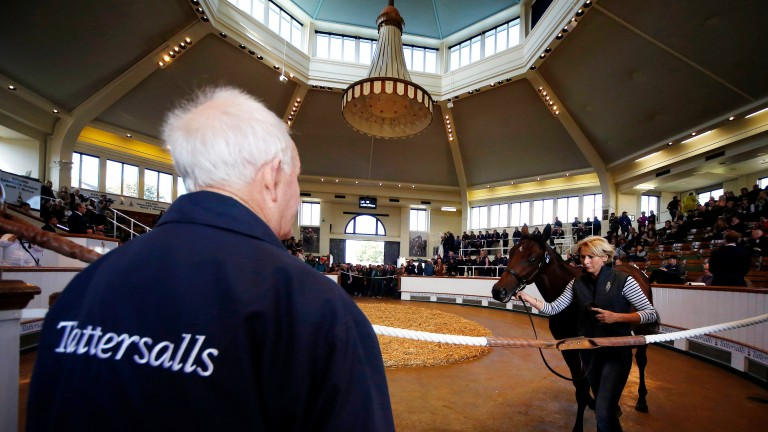 Tattersalls: the three-day Book 1 of the October Yearling Sale kicks off on Tuesday