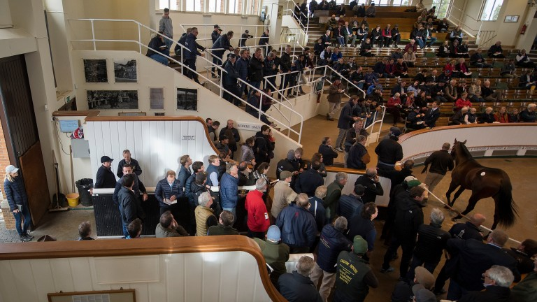 Tattersalls: the three-day Book 1 sale gets under way on Tuesday