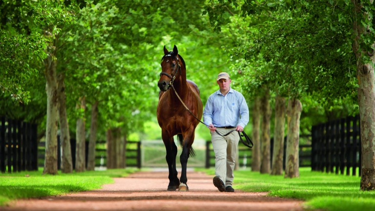 Exceed And Excel: has completed 14 northern hemisphere seasons for Darley