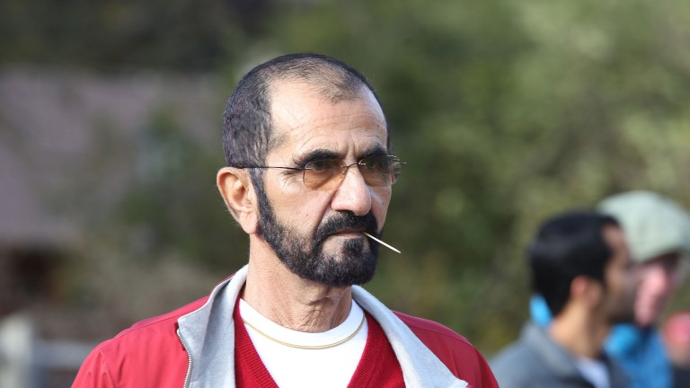 Sheikh Mohammed was among those inspecting yearlings at Park Paddocks on Monday