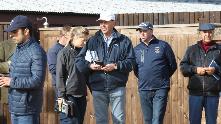 "Angus Gold (white cap): ""I've seen a lot by the sire and we've liked what we've seen"""