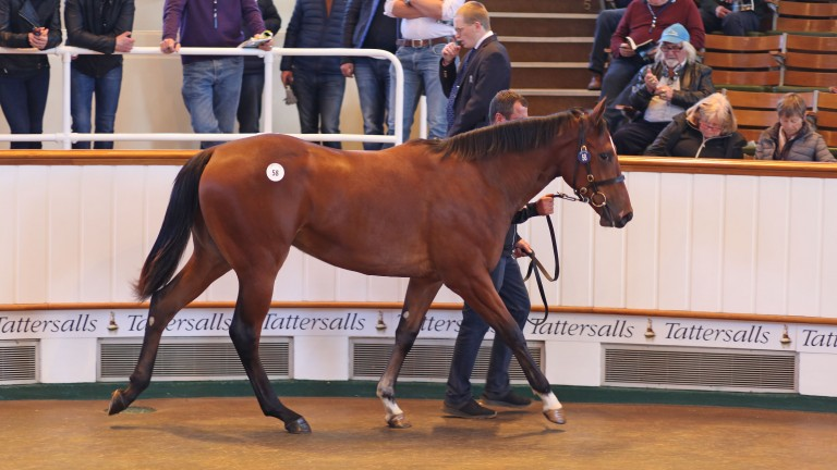 Lot 58: the Muhaarar half-sister to Fairyland in the Tattersalls ring
