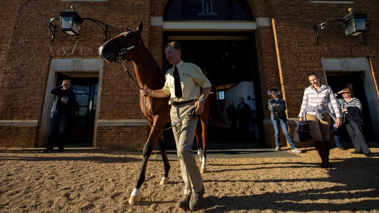 Gerry Meehan and the 3,400,000gns Galileo colt out of Shastye exit the Tattersalls ring