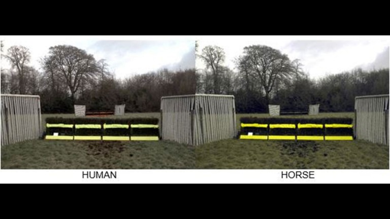 Different perspectives: how latest research suggests human and equine vision varies