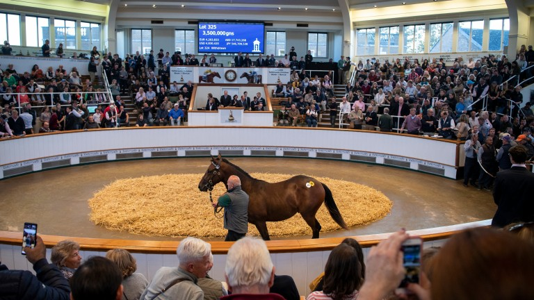 The session-topping Dubawi brother to Too Darn Hot brings 3,500,000gns