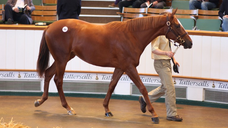 The 1,200,000gns Dubawi filly out of Giants Play