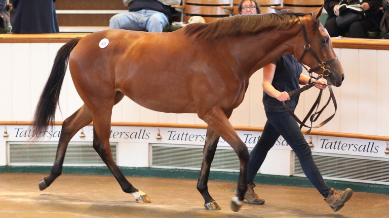 The Galileo filly out of Keenes Royale before bringing a winning bid of 1,200,000gns