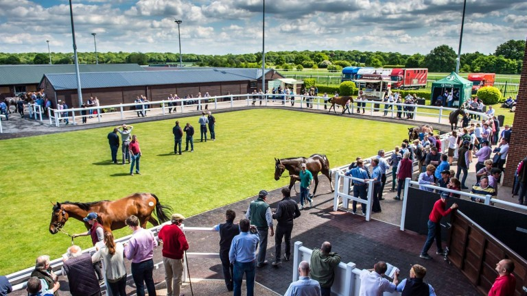 Goffs UK: 156 yearlings catalogued for the Autumn Sale