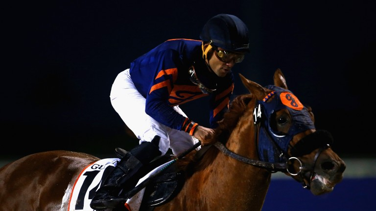 Mind Your Biscuits will entered in two Breeders' Cup races