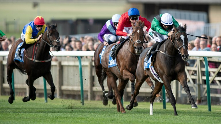 Limato: won the Challenge Stakes in 2017 and 2018