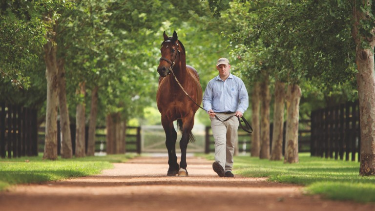 Exceed And Excel: James Garfield is one of 256 stakes performers by the iconic shuttle sire