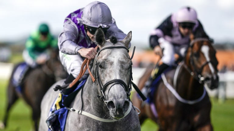 Havana Grey lands the Group 1 Flying Five Stakes at the Curragh