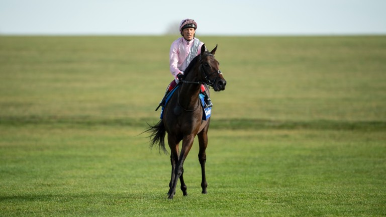 Too Darn Hot: a 38th top-flight winner for Dubawi