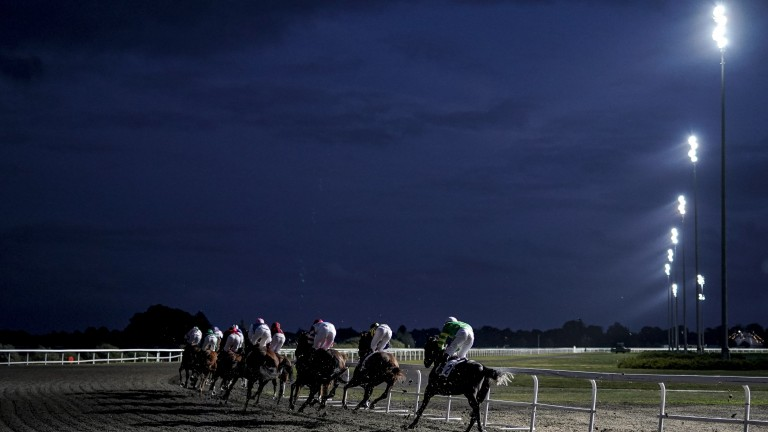Kempton: stages an interesting card this evening
