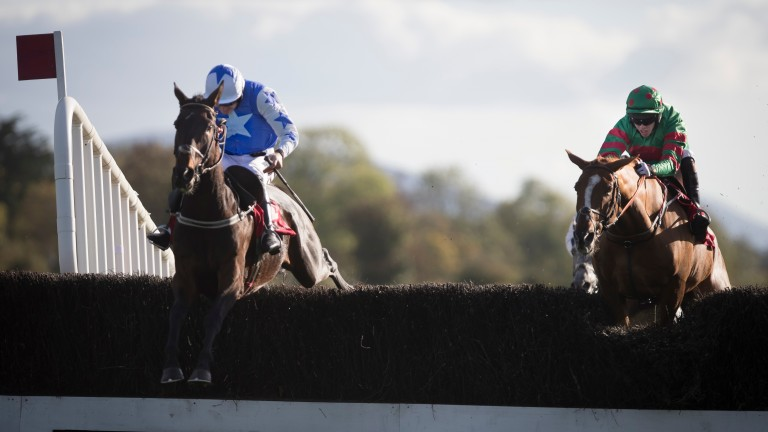 Cadmium (left): has plenty of experience and the extra distance shouldn't be a problem, says trainer Willie Mullins