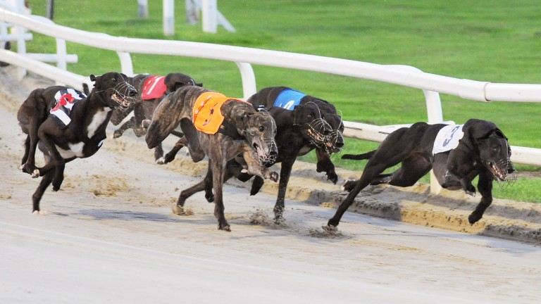 Tuesday's greyhound racing has been cancelled