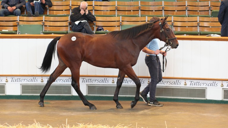Lot 1,165: the No Nay Never colt bought by Alex Elliott for 450,000gns