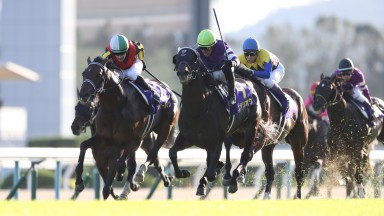 Fierement: captured his first graded victory in the Japanese St Leger
