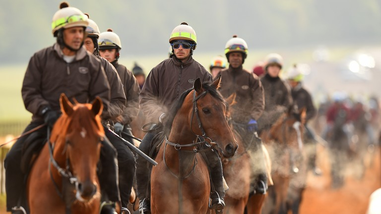 Luca Cumani's string out on Warren Hill in Newmarket
