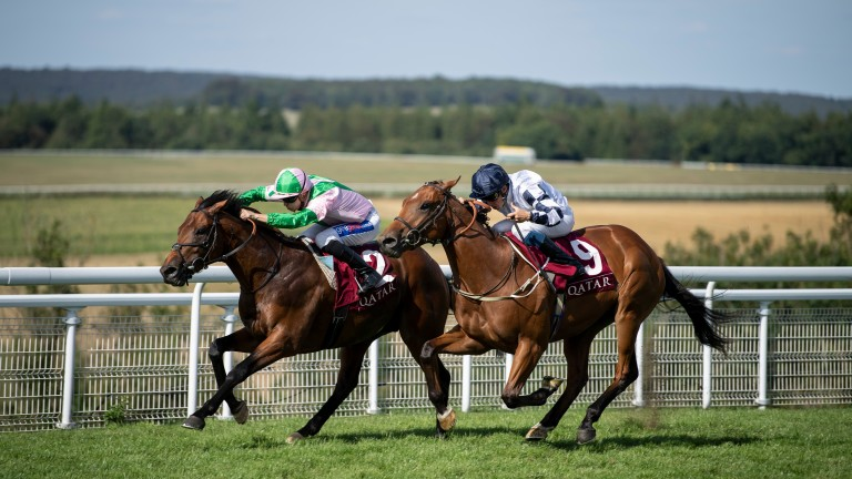 Duke Of Hazzard (left): runs in the Queen Anne Stakes on Tuesday