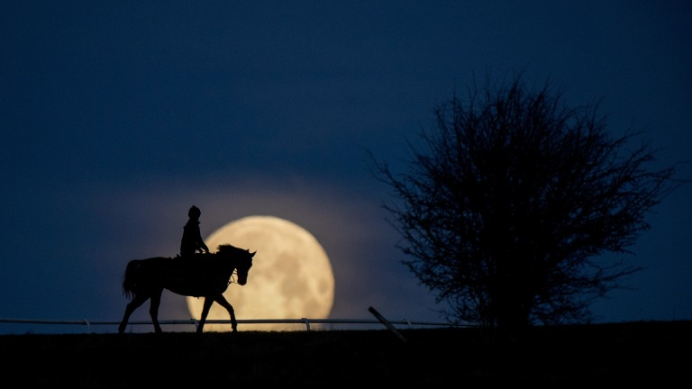 February: Super blue blood moon - the night of January 31/February 1, saw the rising and setting of the 'Super Blue Blood Moon' which only happens every 150 years. Best of all was it was a clear night, so at 6am I was on the gallops at Lambourn