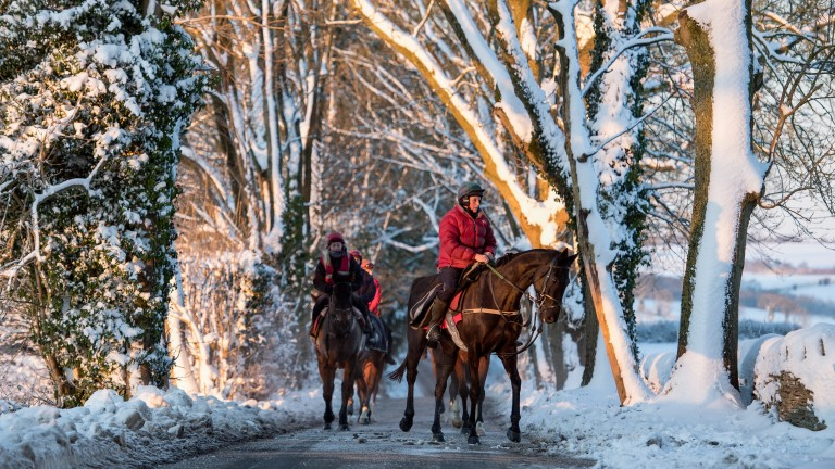 December: In the deep midwinter - Fergal O?Brien?s first lot return to their stables at Naunton in Gloucestershire. It was minus seven as I lay in the snow to get pictures on the gallops and nearly froze