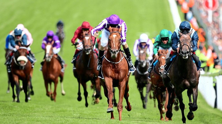 Australia (centre): finished second at the Irish Derby meeting on his first start
