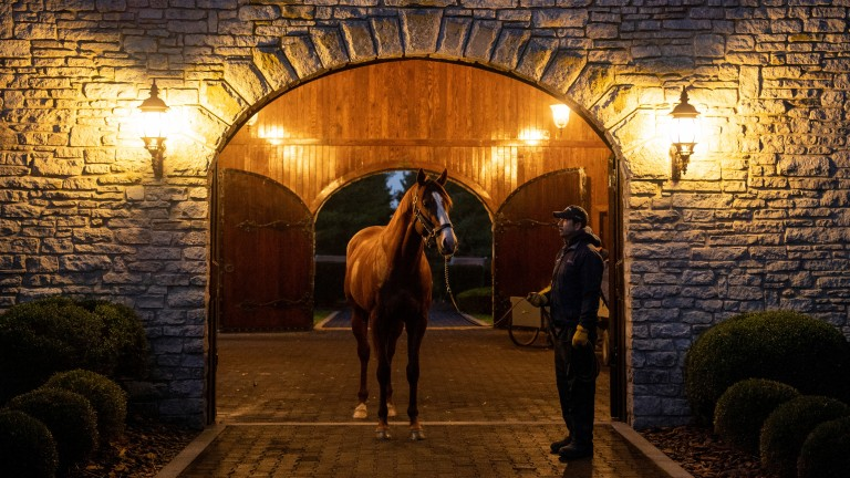 Justify: fee for the Triple Crown winner by Scat Daddy is being kept private