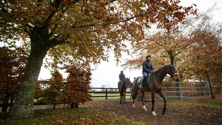 Qasim Raza rides Footpad through the autumnal yard in Closutton