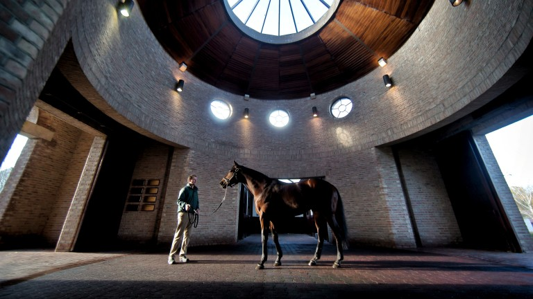 Sea The Stars: the king of Gilltown Stud will again stand for ?135,000 in 2019