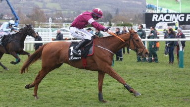 Samcro: is expected to improve a lot from his Down Royal defeat in the Morgiana Hurdle