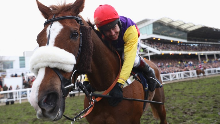 Native River: an excellent winner of last season's Gold Cup