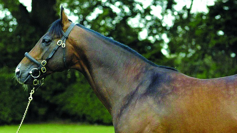 Acclamation: heads the Rathbarry Stud roster