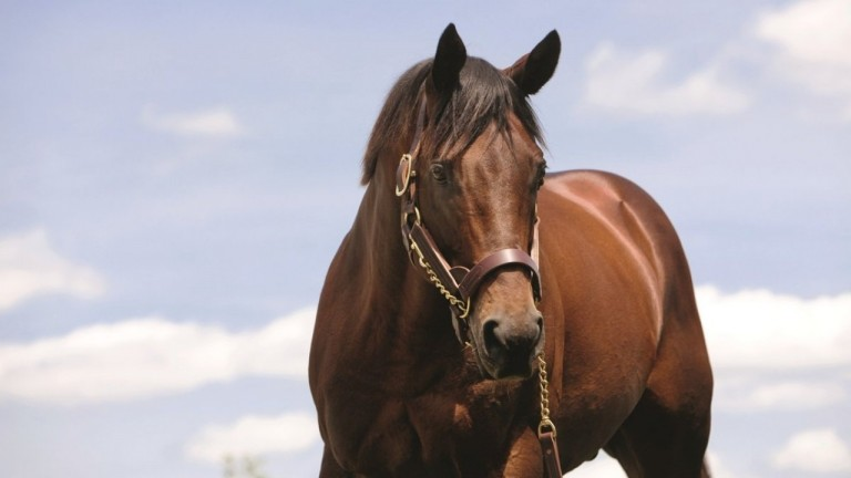 Elusive Quality: his daughters supplied two winners at the Breeders' Cup