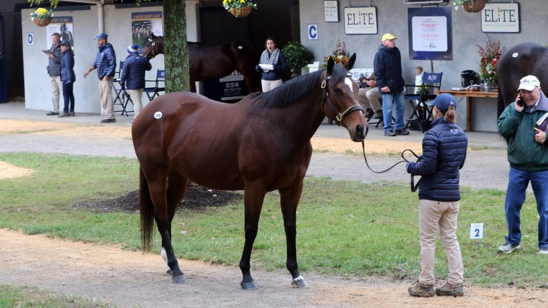 Cover Song: the half-sister to US Navy Flag was led out unsold at $3.9 million